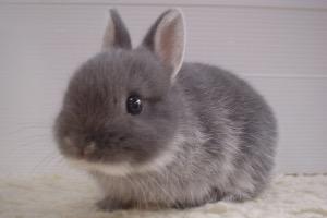 Quizz : Aimez-vous les lapins ?