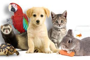 Connais tu vraiment les animaux?